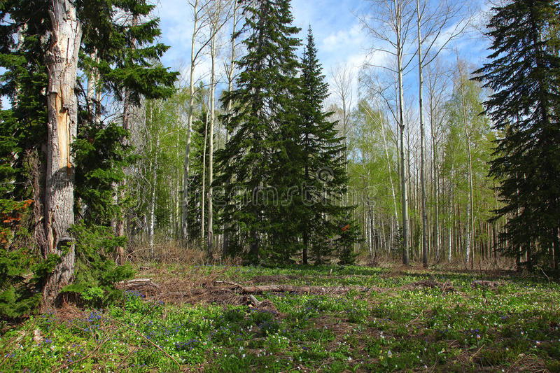 Download Divers bos bij de lente stock afbeelding. Afbeelding bestaande uit life - 39116431