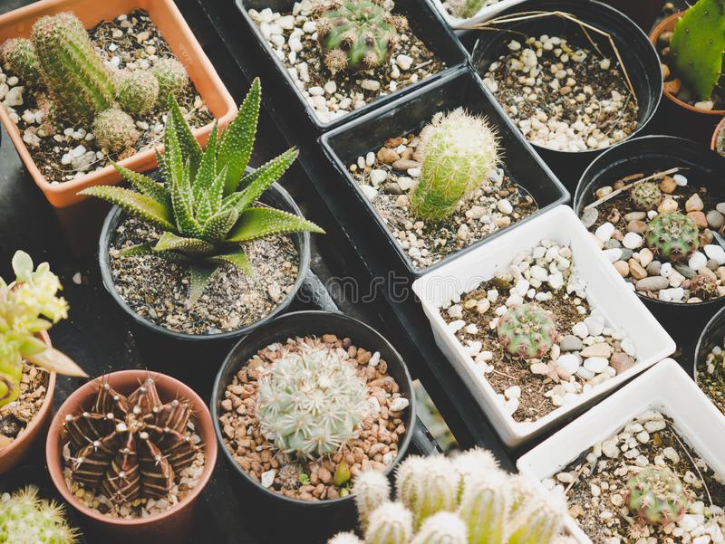 Divers de l'usine de cactus dans les terres cultivables Concept de plante ornementale industrielle et Th?me d'agriculture et de n images libres de droits