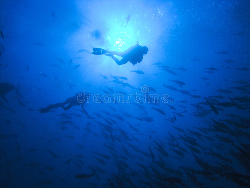 Divers at deep blue stock photography