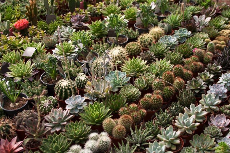 Divers fond mis en pot de succulents et de cactus image stock