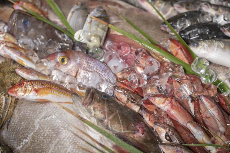 Divers fruits de mer et poissons frais sur la poissonnerie photographie stock libre de droits