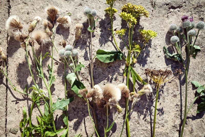 Divers genres de fleurs sauvages au sol disposé dans une rangée photographie stock libre de droits