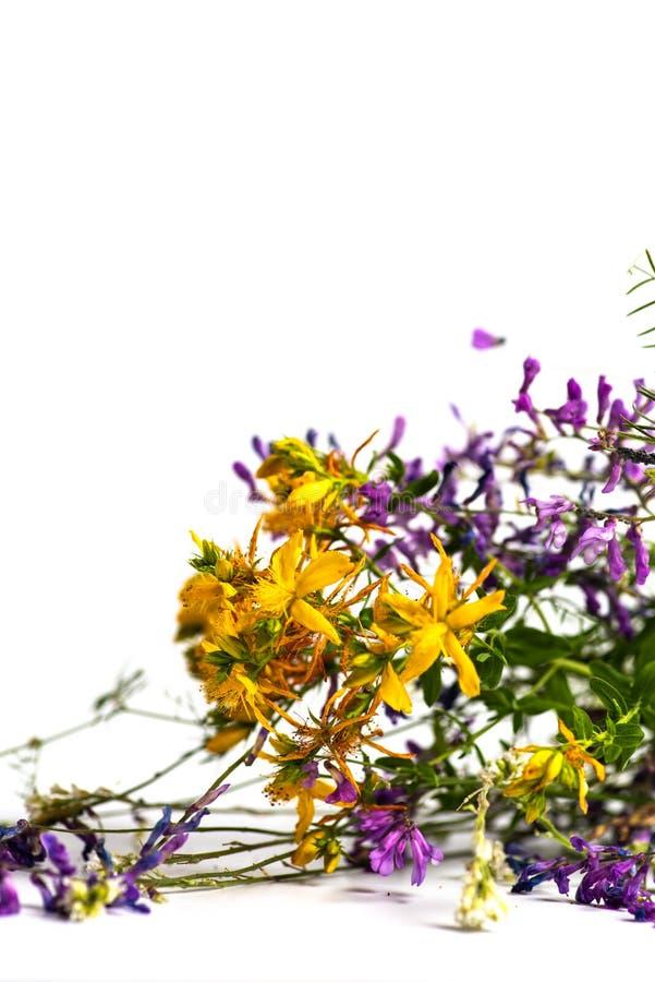 Divers gezond geïsoleerd boeket van kruidenbloemen royalty-vrije stock foto
