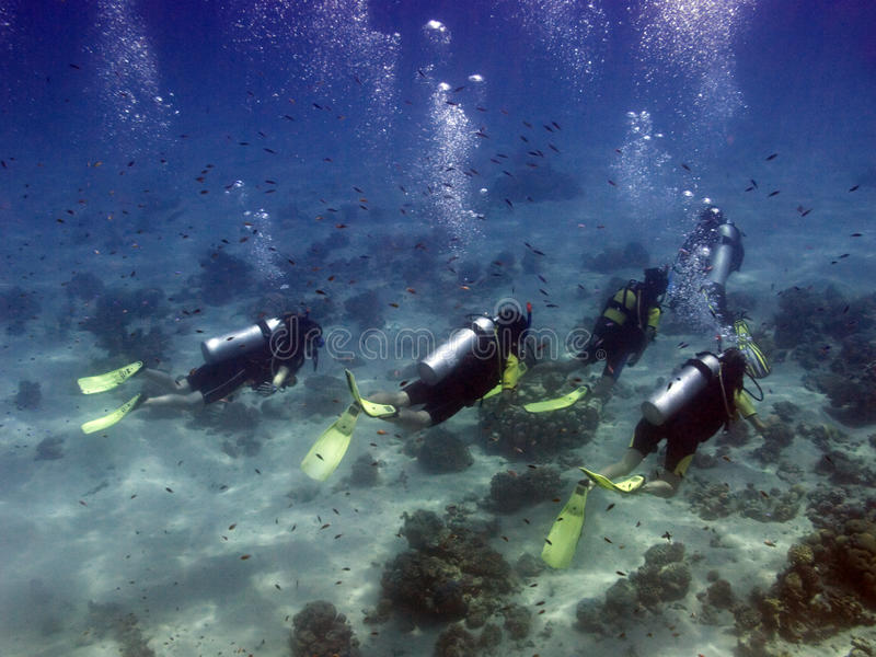 Divers with guide stock photos