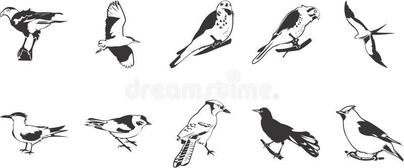 Divers oiseaux illustration de vecteur