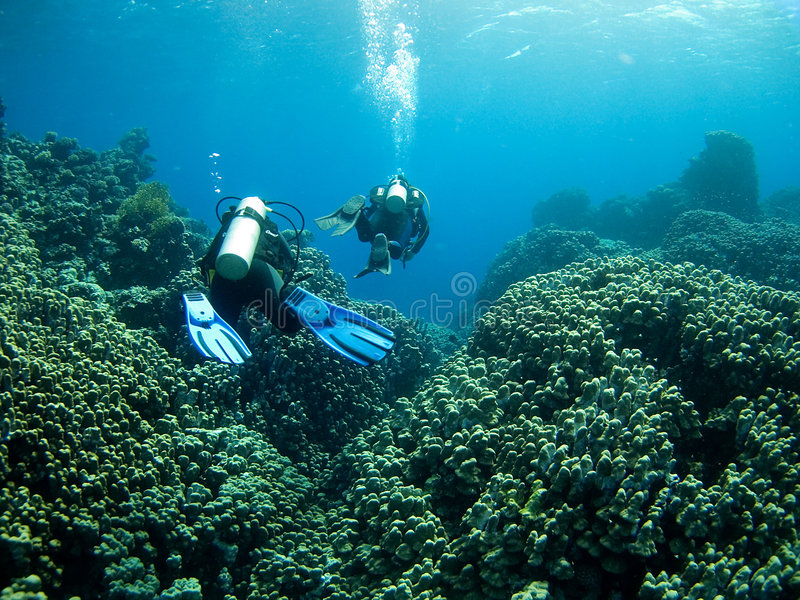 Divers over coral reef stock images