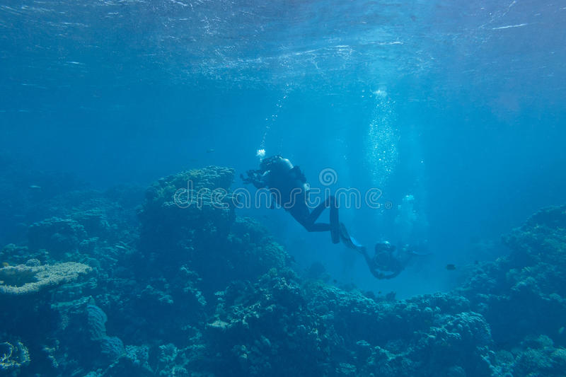 Divers over a coral reef in tropical sea, underwater stock images