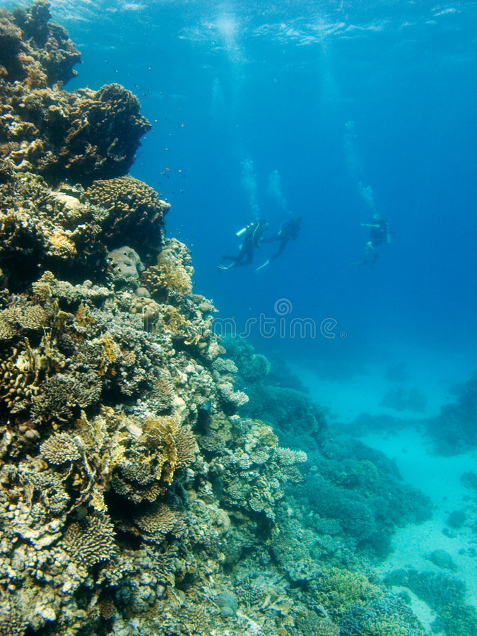 Divers in the Red Sea stock photos
