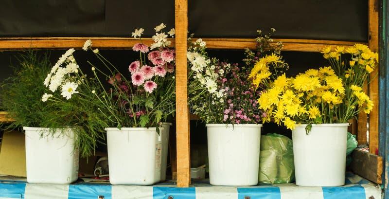 Divers soort bloemen in een witte die pottenfoto in Semarang Indonesië wordt genomen royalty-vrije stock fotografie