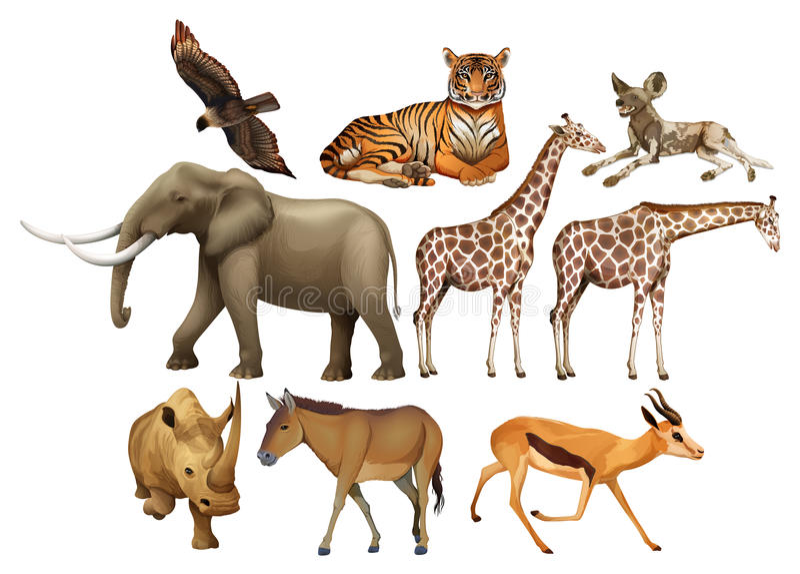 Divers soort wilde dieren vector illustratie