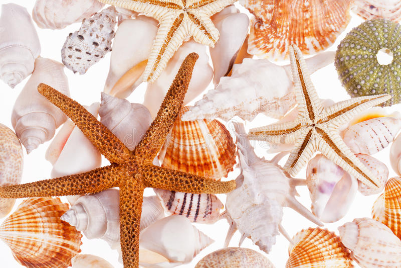 Divers types de coquilles de mer sur le fond blanc image libre de droits