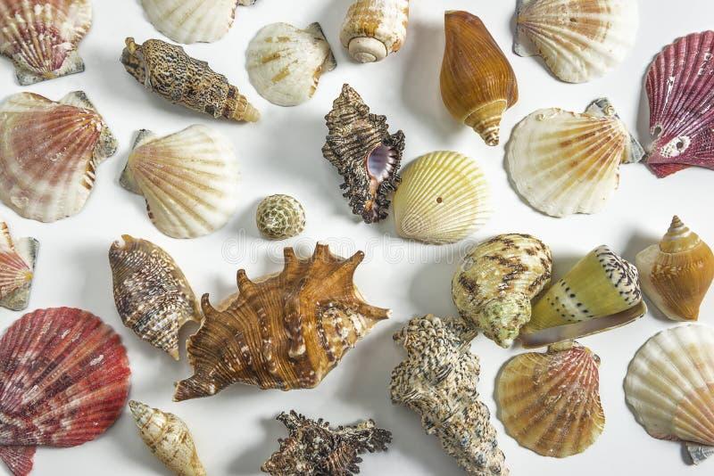 Divers van mooie overzeese shells op witte achtergrond royalty-vrije stock afbeelding