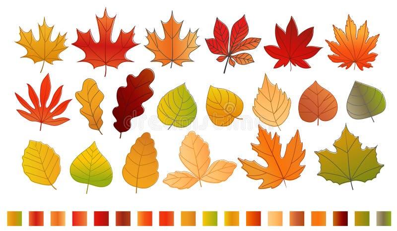 Diversa colección del vector de las hojas de otoño del color stock de ilustración