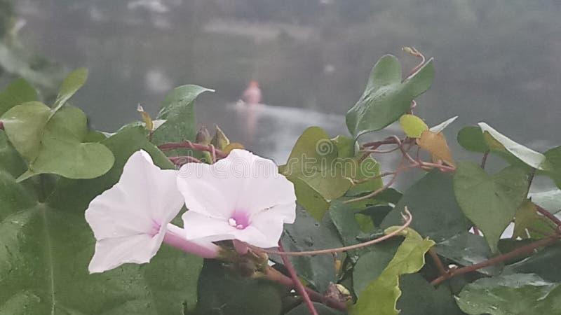 Diversa flor imágenes de archivo libres de regalías