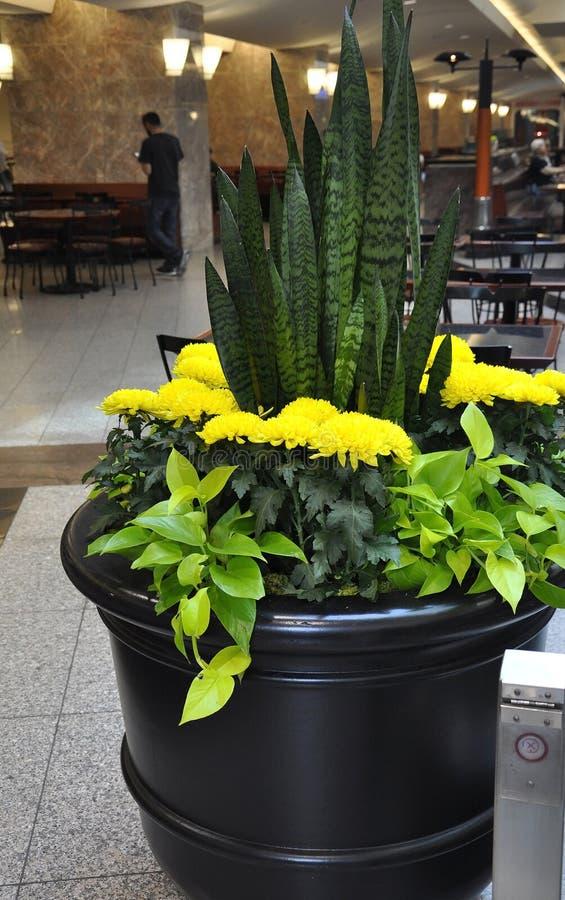Diversa jardinera de las flores en la zona de la consumición dentro del lugar de Brookfield en Toronto imagen de archivo libre de regalías