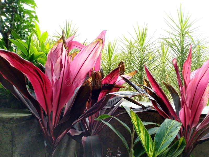 Diversa variedad colorida de hojas imagen de archivo
