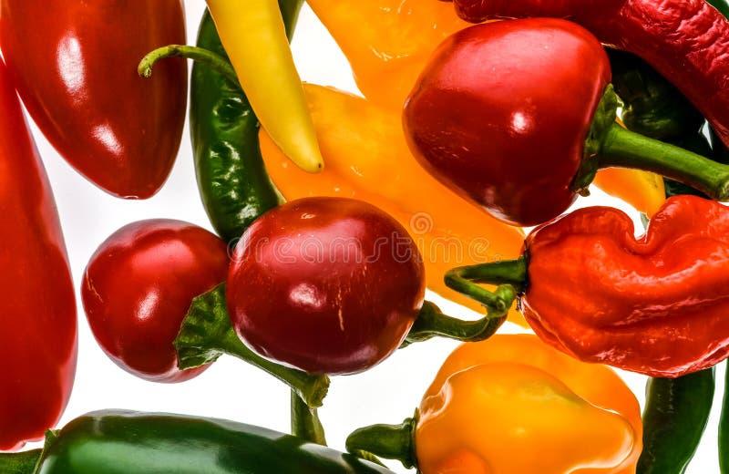Diversa variedad de pimientos picantes o de chiles, aislada en blanco imagen de archivo libre de regalías