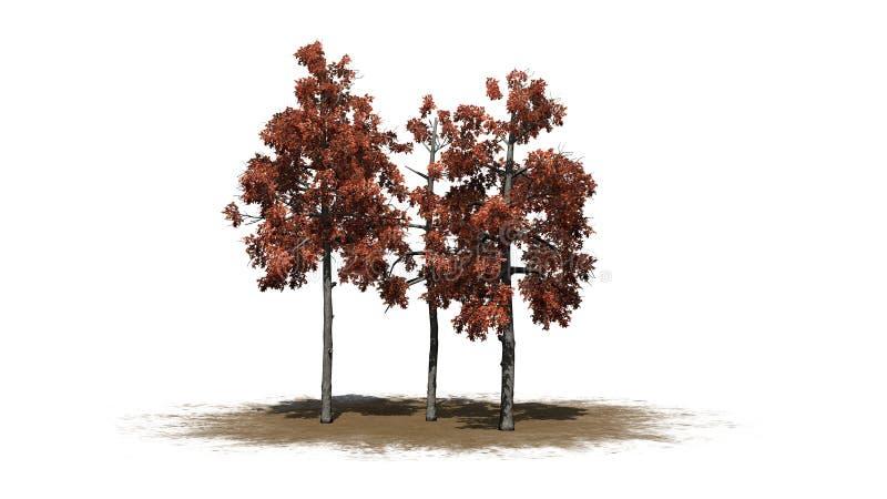 Diversas árvores de goma preta diferentes no outono em uma área da areia ilustração royalty free