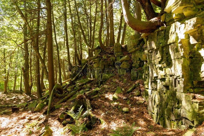 Diversas árvores que crescem fora de uma parede da rocha em Door County, WI imagens de stock royalty free