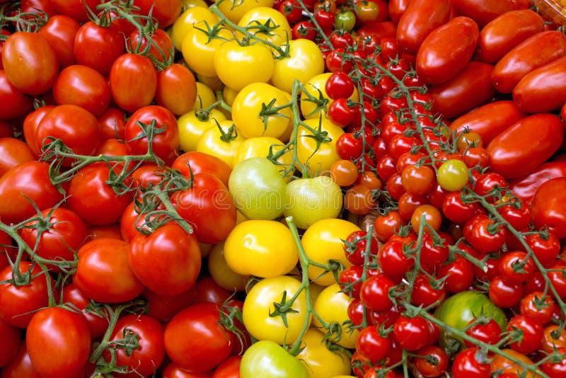 Diversas clases de tomates imágenes de archivo libres de regalías
