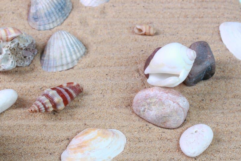Diversas conchas marinas en la arena foto de archivo libre de regalías