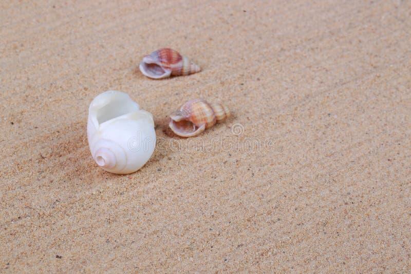 Diversas conchas marinas en la arena foto de archivo
