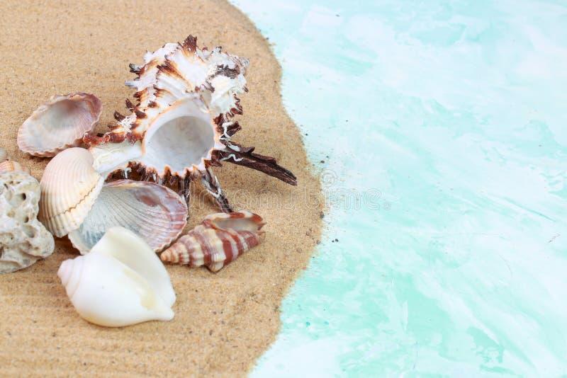 Diversas conchas marinas en la arena fotografía de archivo libre de regalías