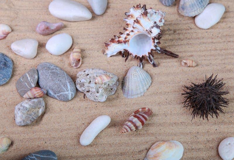 Diversas conchas marinas en la arena imagenes de archivo