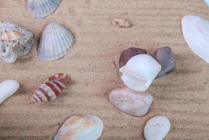 Diversas conchas marinas en la arena imagen de archivo
