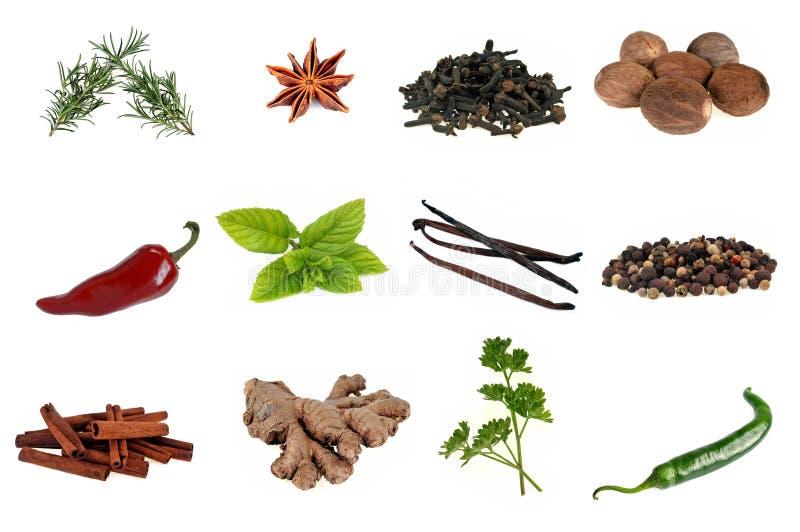 Diversas especias y plantas aromáticas en un fondo blanco fotos de archivo libres de regalías