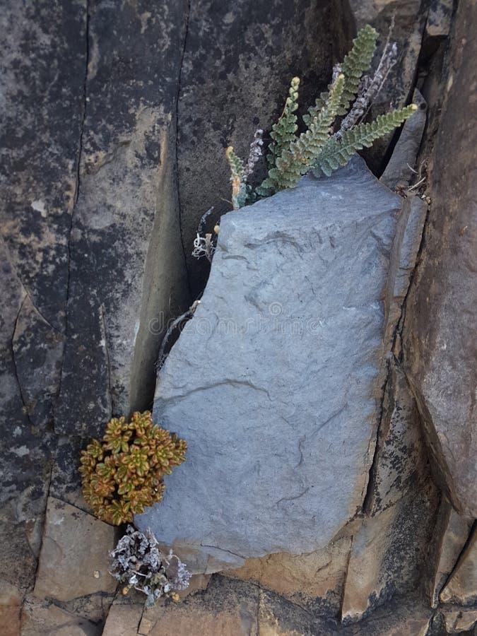 Diversas flores blancas y piedra imagen de archivo