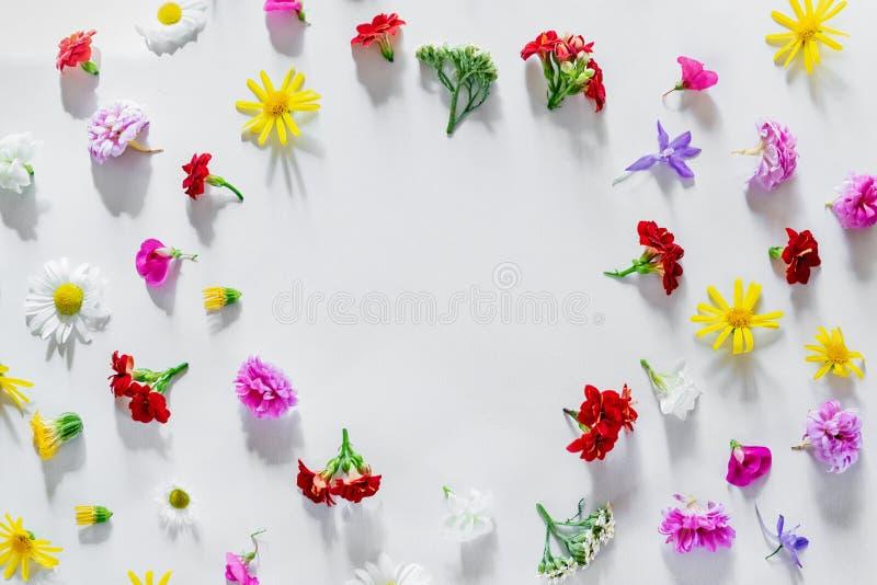 Diversas flores coloridas de la primavera que crean el modelo fotografía de archivo