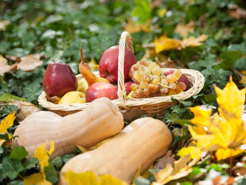 Diversas frutas y verduras en cesta en hierba verde. Verduras de la cosecha del otoño al aire libre (uvas, manzanas, calabaza) imágenes de archivo libres de regalías