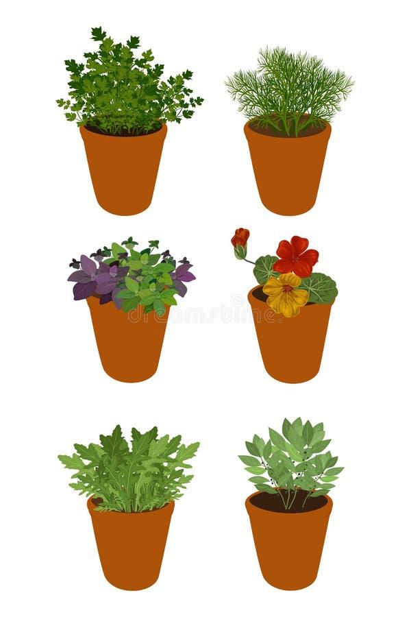 Diversas hierbas aisladas en potes: hojas, arugula, albahaca, perejil, eneldo y capuchina de la bahía libre illustration
