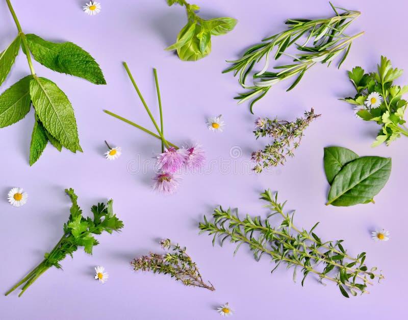 diversas hierbas frescas aromáticas con pocas margaritas en fondo púrpura foto de archivo libre de regalías
