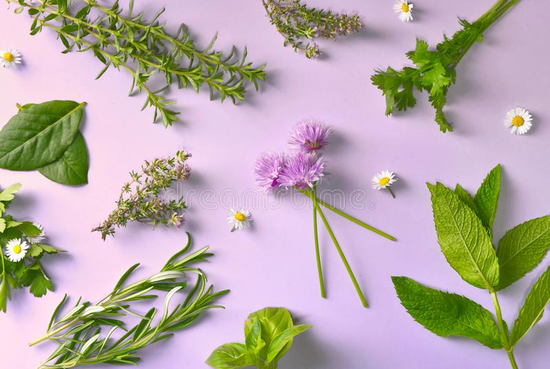 Diversas hierbas frescas aromáticas con pocas margaritas en fondo rosado fotos de archivo