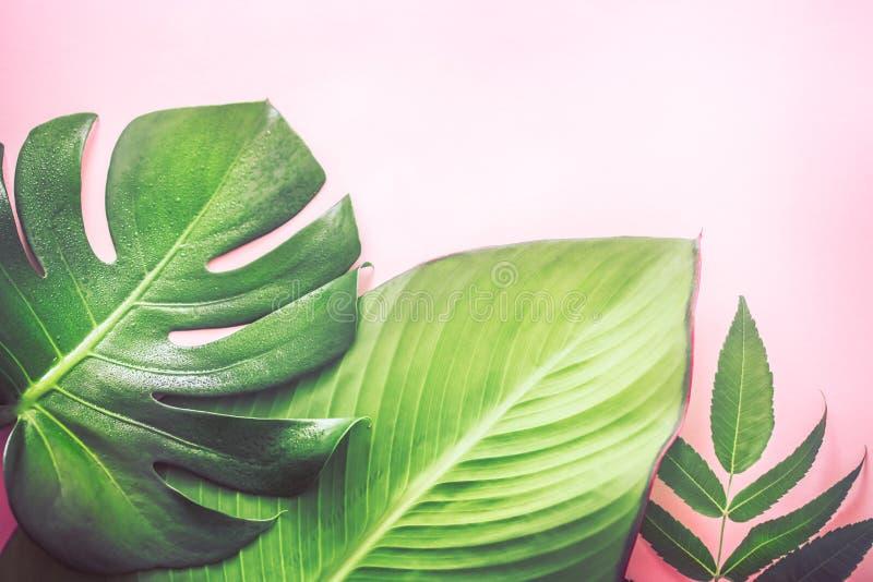 Diversas hojas tropicales hermosas en fondo rosado fotos de archivo