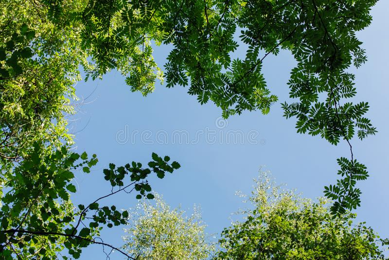 Diversas hojas verdes en el árbol el día soleado imagen de archivo libre de regalías