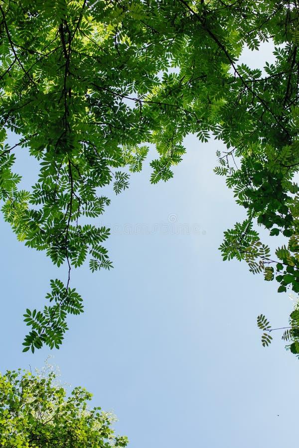 Diversas hojas verdes en el árbol el día soleado imágenes de archivo libres de regalías