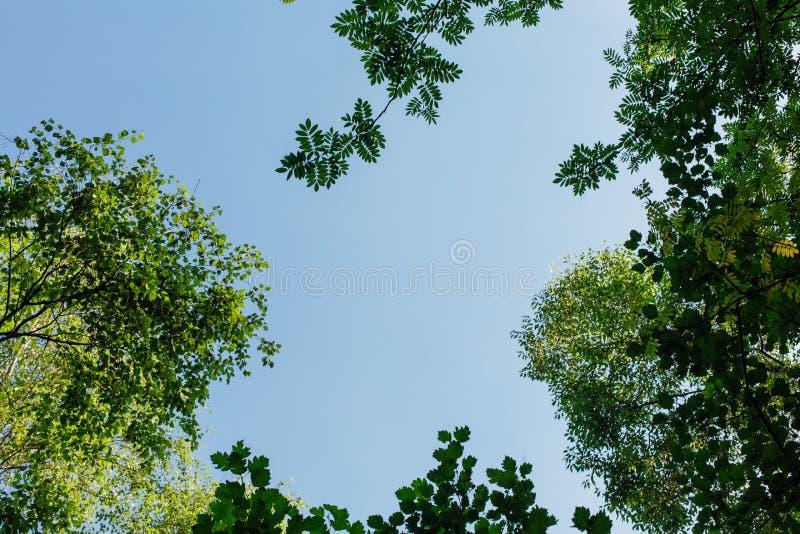 Diversas hojas verdes en el árbol el día soleado imagen de archivo