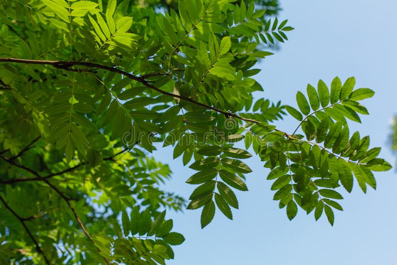 Diversas hojas verdes en el árbol el día soleado foto de archivo libre de regalías