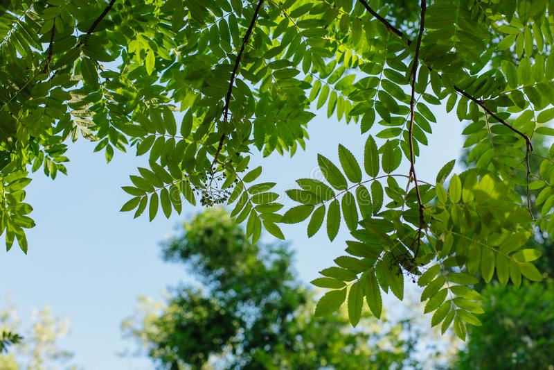 Diversas hojas verdes en el árbol el día soleado fotografía de archivo libre de regalías