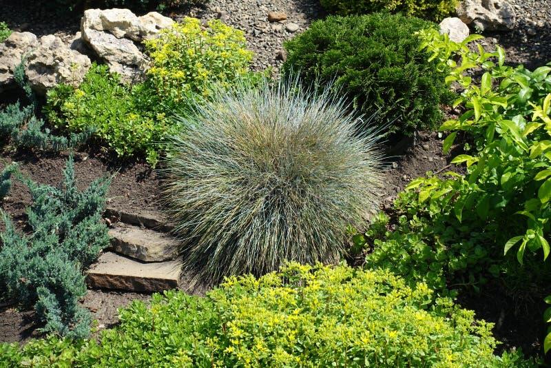 Diversas plantas en el jardín de piedras imagenes de archivo