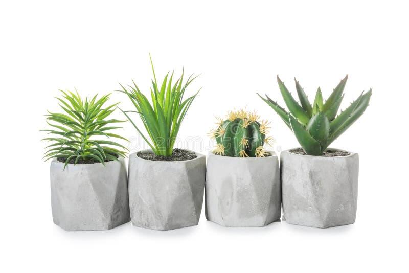 Diversas plantas en potes en el fondo blanco imágenes de archivo libres de regalías