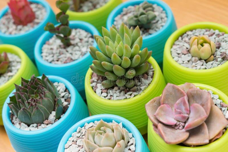 Diversas plantas suculentas en la tabla de madera imagenes de archivo