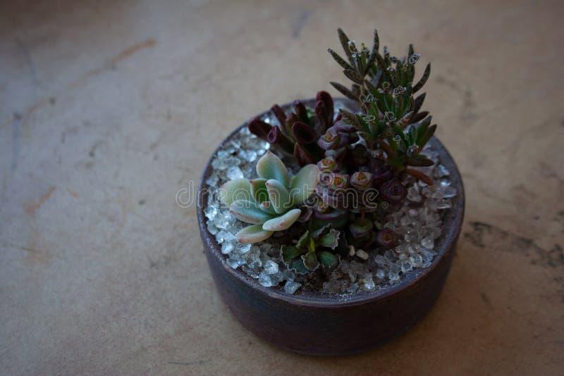 Diversas plantas suculentas en pote concreto marrón imagen de archivo