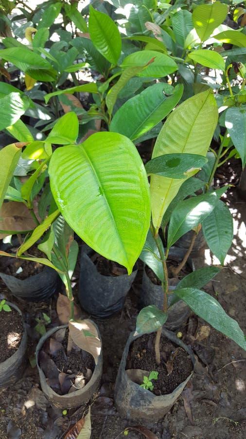 Diversas semillas de la planta en el jardín fotos de archivo libres de regalías