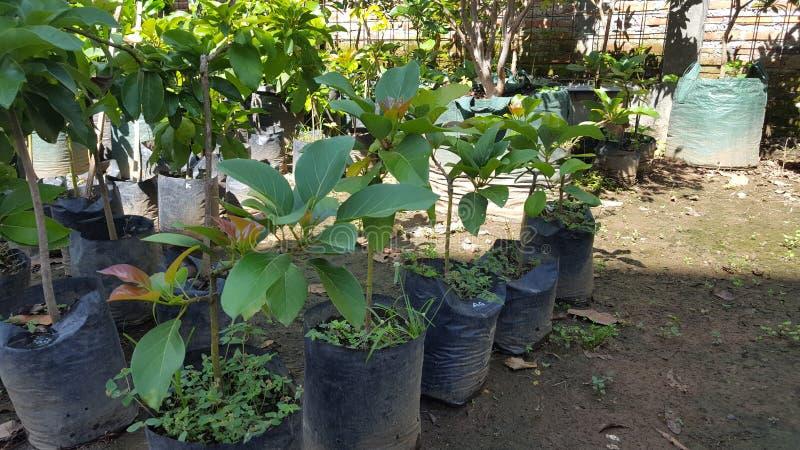 Diversas semillas de la planta en el jardín imagen de archivo libre de regalías