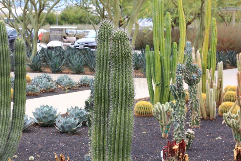 Diversas variedades de cactus imagen de archivo
