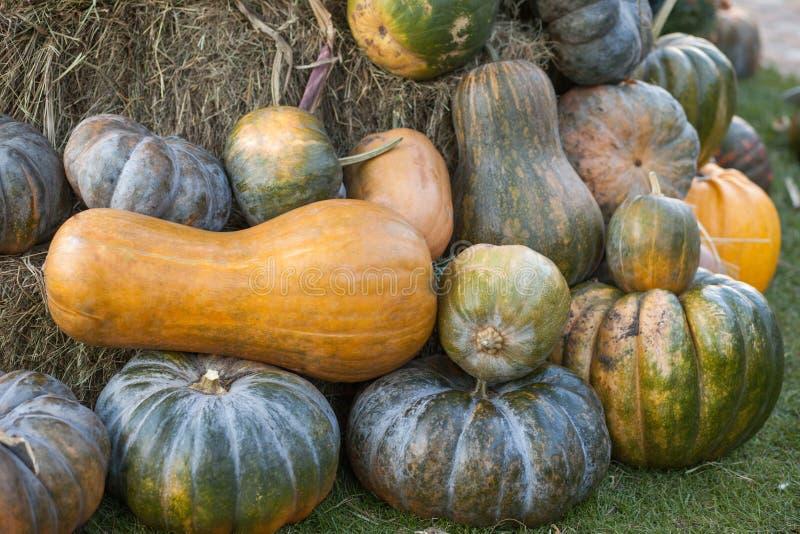 Diversas variedades de calabazas y de calabazas en la paja Opinión superior de las verduras coloridas Calabazas anaranjadas y ver foto de archivo